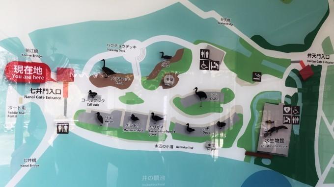 井の頭公園 (12)