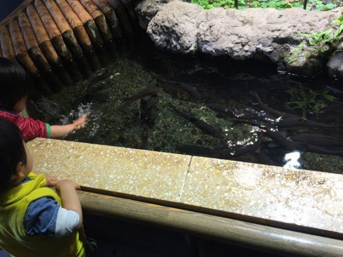 井の頭公園 (2)