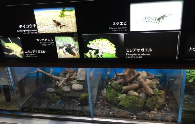 井の頭公園 (3)